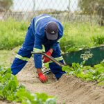 Immigration for Migrant Workers